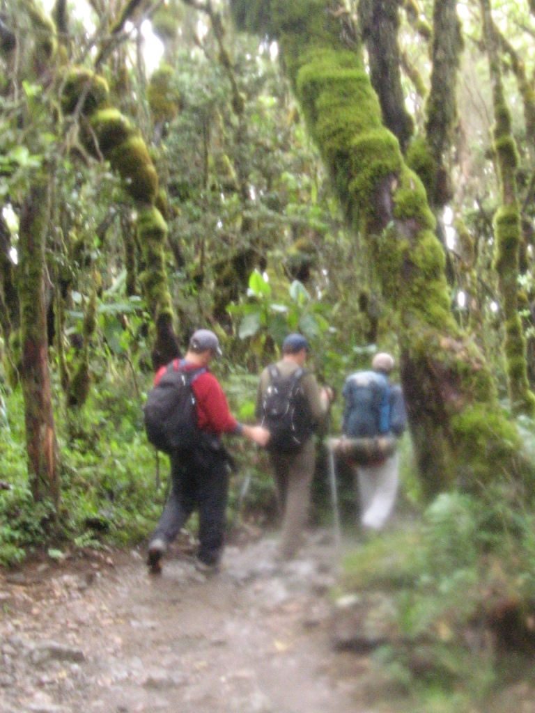 Hiking through the Kilimanjaro rain forest